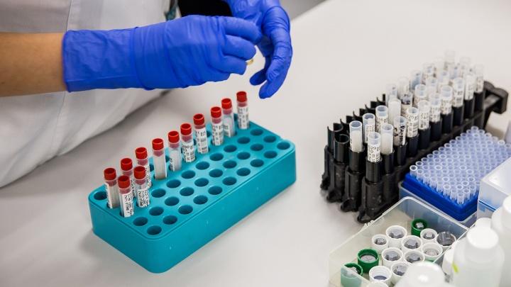 Кровотечение, жажда и смерть: врач рассказал о симптомах отравления крысиным ядом