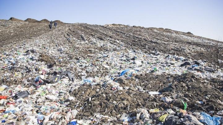 На месте мусорного полигона в Ярославской области зацветёт роща