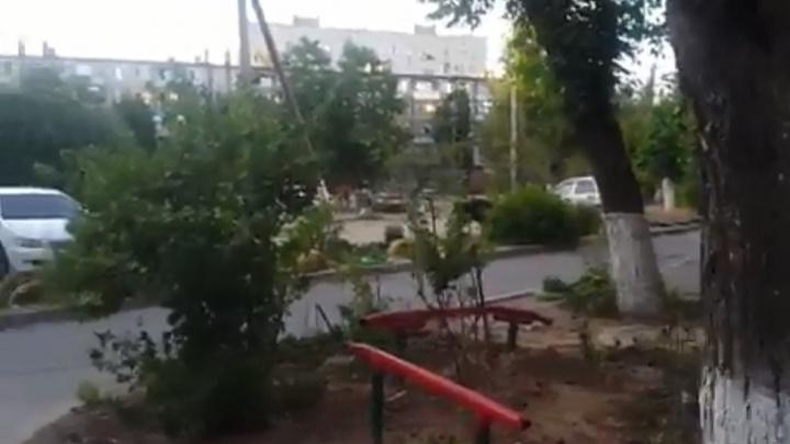 Во двор Дзержинского района Волгограда забрел бесцеремонный кабан