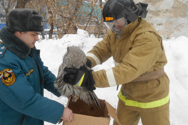 Спасатели накормили сову и отпустили обратно в лес