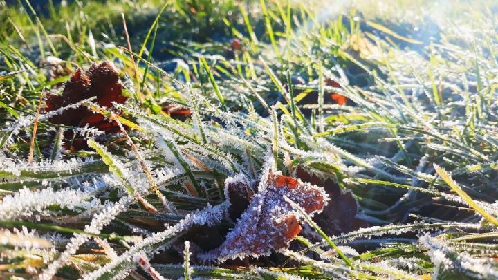 Опять в минус: заморозки не уходят из Самарской области