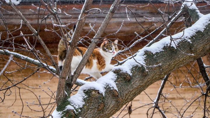 Кружит и вьётся: смотрим, как Нижний Новгород потихоньку засыпает снегом