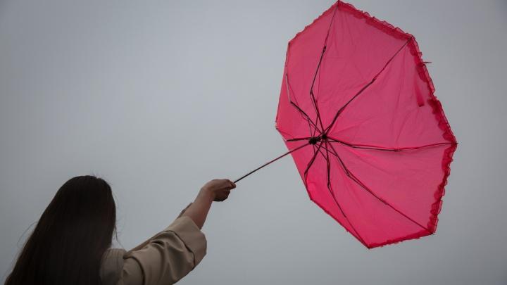 Новосибирцев предупредили о ветре с порывами до 20 м/с