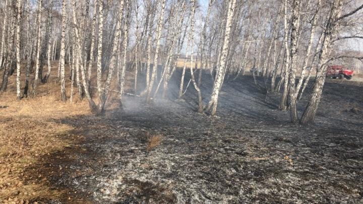 «Тушили ветками»: челябинцы боролись с лесным пожаром недалеко от аэропорта