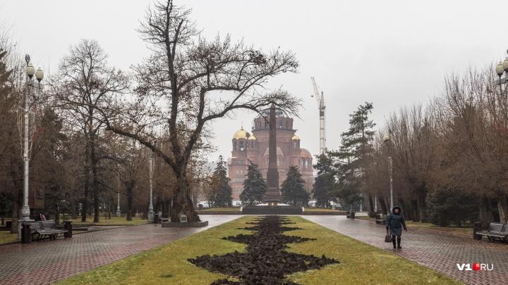 Легендарный тополь в центре Волгограда спасут от падения