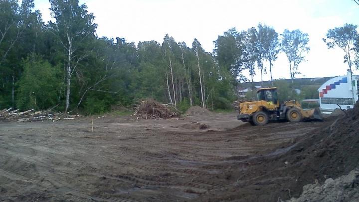 Около гимнастического центра Евгения Подгорного вырубили деревья