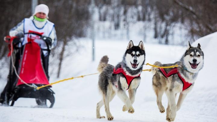 «Незабываемый движ»: лучшие события первых выходных зимы
