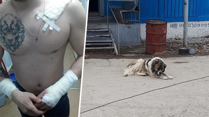 В Новокуйбышевске бездомный алабай растерзал спасателя