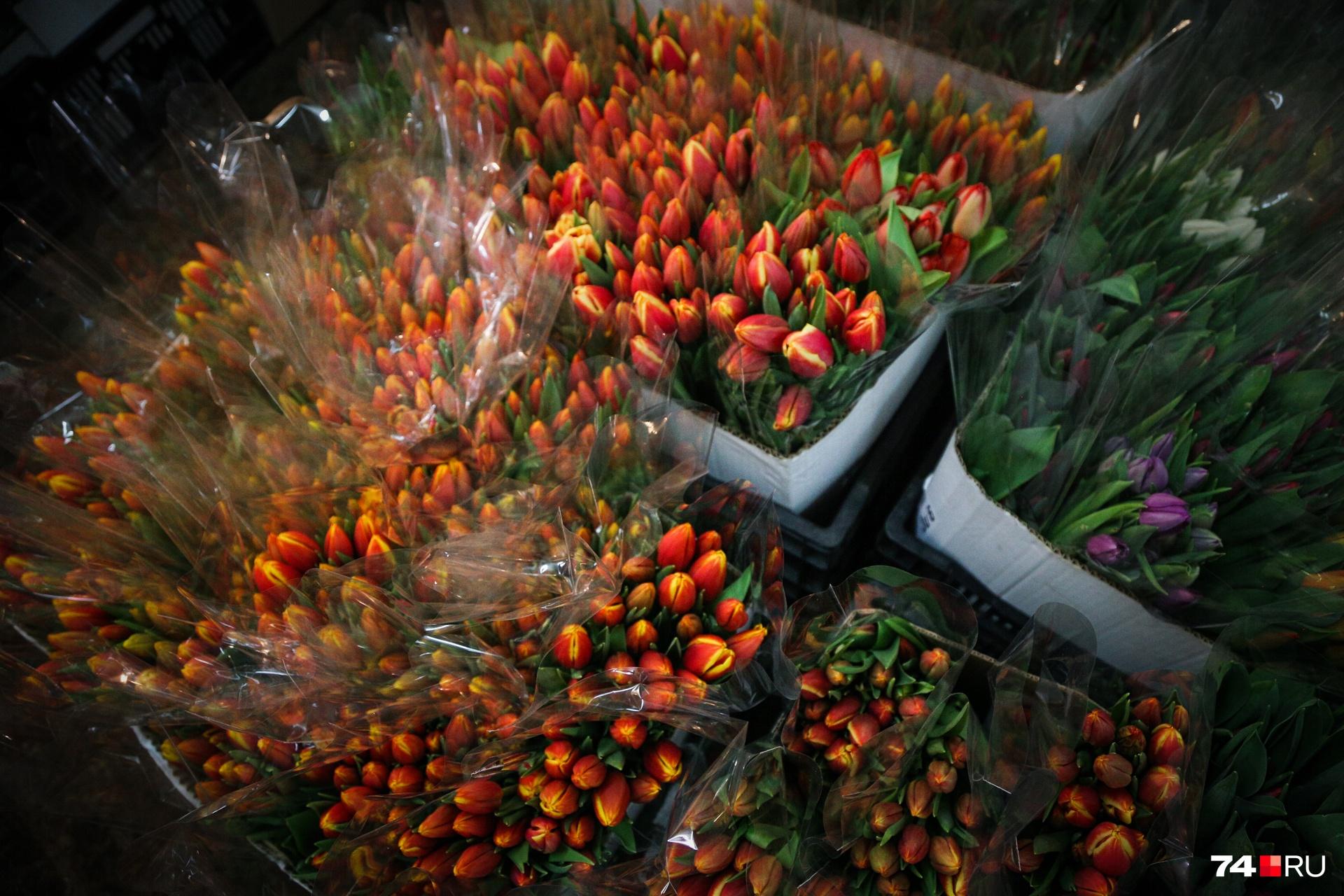 Разноцветные тюльпаны выглядят очень эффектно