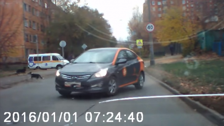 Собака кинулась под движущийся авто и подставила водителя