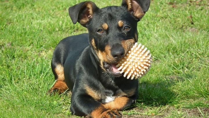 Команда «Гулять!»: обустраиваем площадку для выгула собак