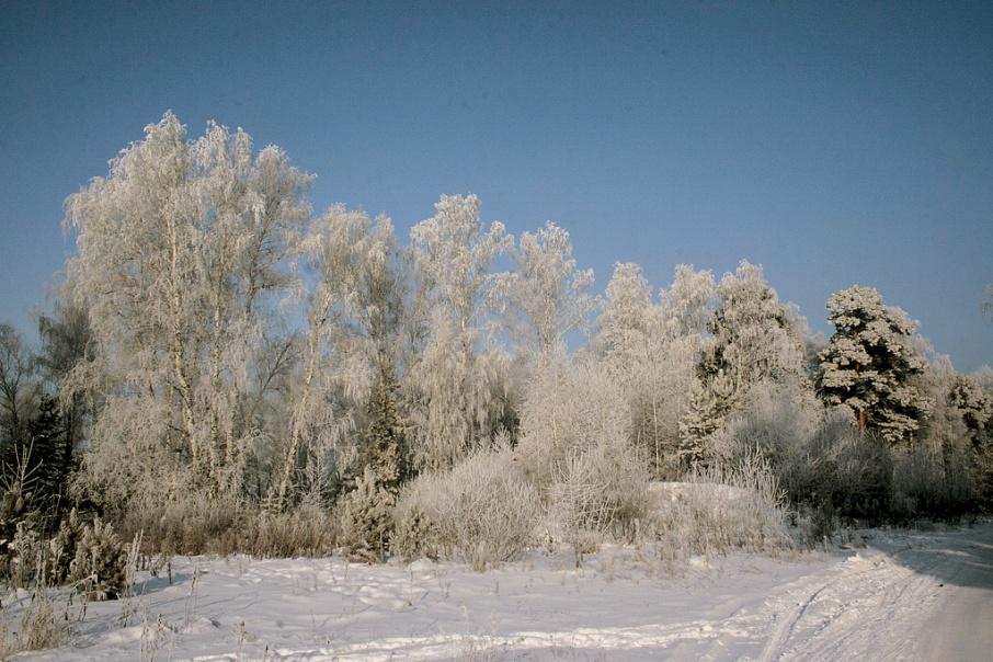 В рождественскую ночь прогнозируют до 24 градусов холода