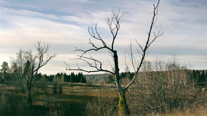 Покрышки, мусор, повреждения почвы: в Перми и Краснокамске природные территории захламили отходами