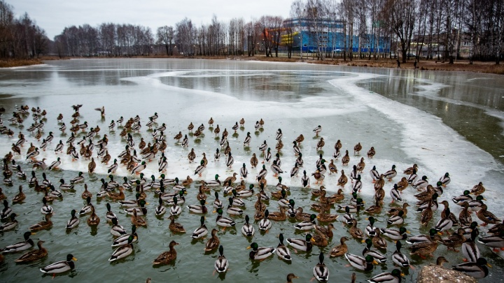Нас ждёт разочарование: синоптики рассказали, какой сюрприз преподнесёт погода в декабре