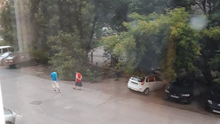 В Уфе на территории школы рухнуло дерево