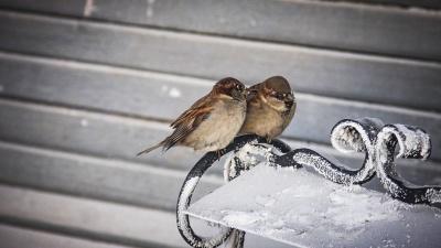Угадай зиму по воробью: какие народные приметы реально работают?
