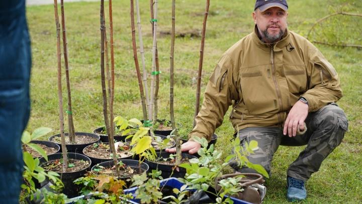«Зелёная среда»: на Тополиной аллее в центре Челябинска высадили клёны, берёзы и рябины