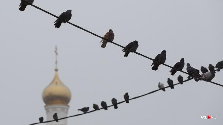 Новогодняя сказка еще в пути: в начале недели на оттаявший Волгоград обрушится туман и морось