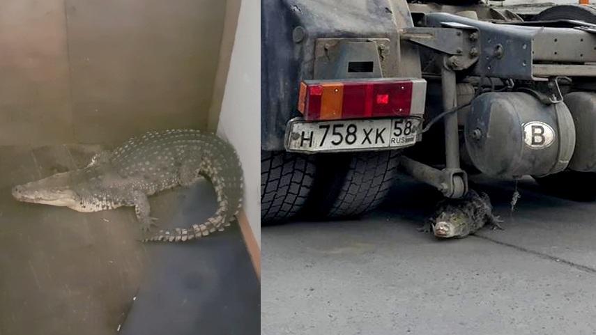 Крокодил паркуется в Новосибирске