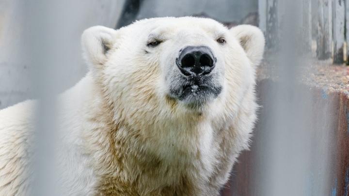 Пермский зоопарк временно закрыли на ремонт после урагана
