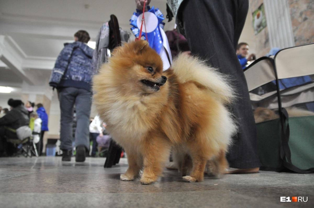 Собак можно защитить от инфекций, которые передают клещи, ошейником, каплями или таблеткой
