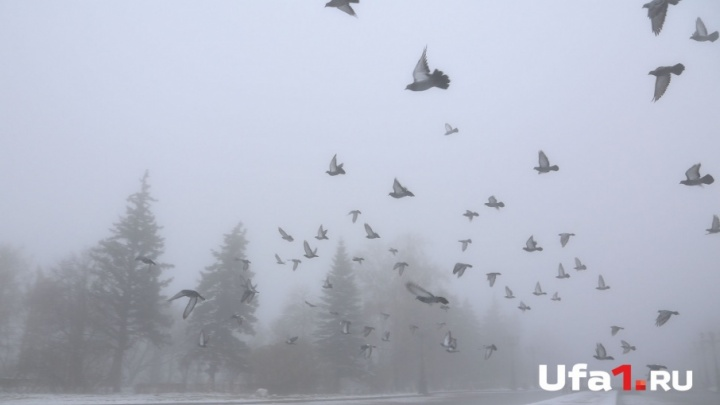 МЧС Башкирии предупреждает: на дорогах ухудшится видимость