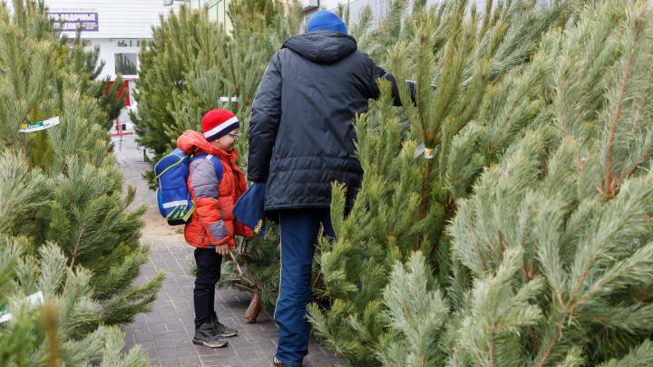 В Волгограде цены на новогодние ёлки одни из самых высоких по России