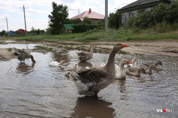 Число домашних птиц в этом году в Волгоградской области сократилось на четверть