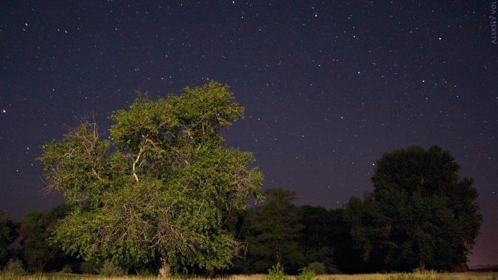 Слишком плотные облака: волгоградцы из-за плохой погоды не увидят рой ярких звезд