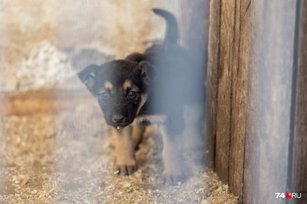 Ещё больше 70 собак остаются в ветприёмнике и ждут хозяев