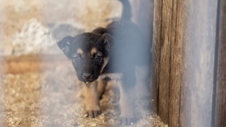 Всё псу под хвост: в Челябинске перестали отлавливать бездомных животных