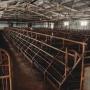 Из-за дерматита коров на тюменских трассах развернут ветпосты