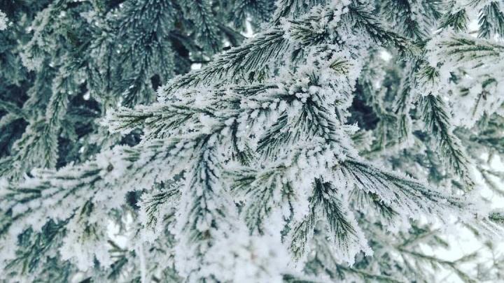 Как в фильме «Послезавтра»: морозный Красноярск покрылся инеем и застыл