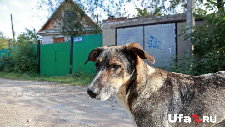 Держите собак на привязи: в Уфе на двухлетнего ребенка напал пес