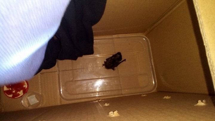 Летучая мышь залетела в окно квартиры на Вильского: волонтеры хотят оставить ее на зиму в приюте