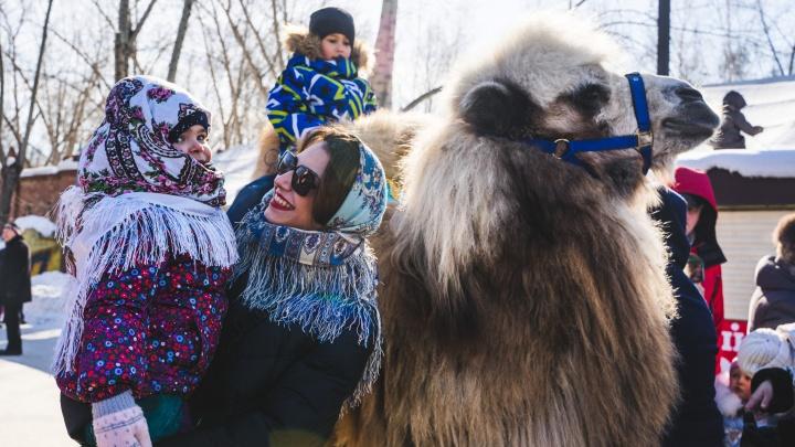 Масленица с шашлыками: фоторепортаж об омских проводах зимы