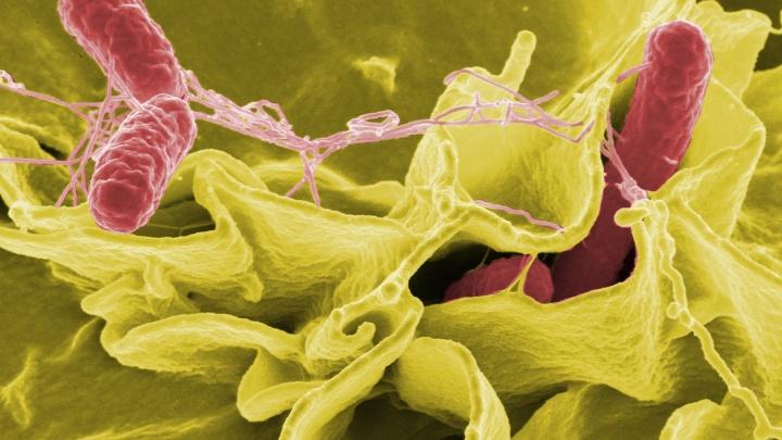 Яичница — опасное блюдо: спрашиваем инфекциониста о сальмонелле
