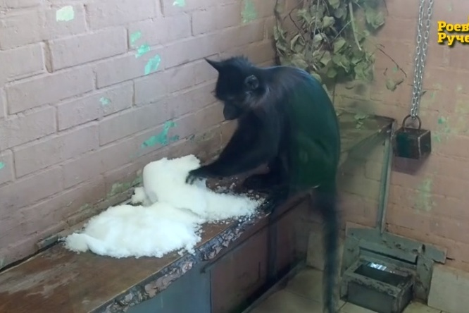 Маленькая обезьянка игра