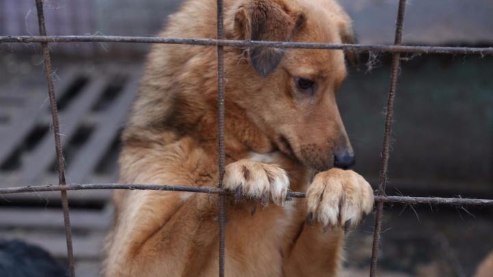 Неестественный отбор: почему сложно взять животное из приюта