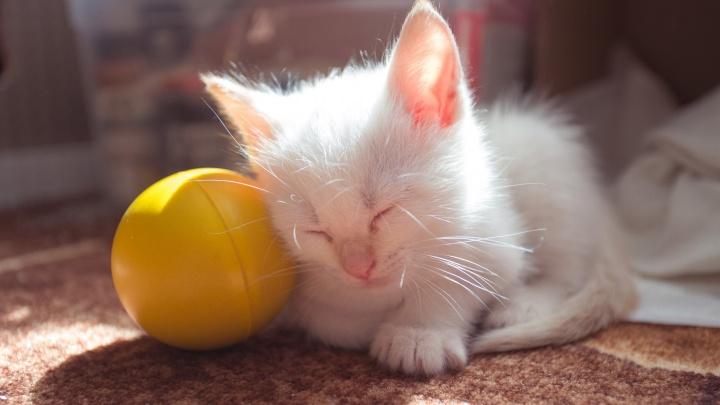 Сегодня праздник у котов! Как ярославские мурзики встречают весну