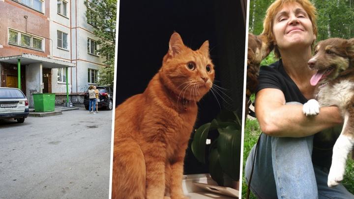 «Она превращается в монстра»: зоозащитница обвинила подозреваемую в расчленении кота в жестокости