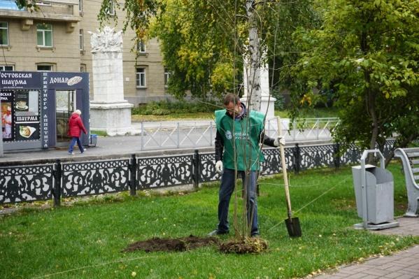 Рябиновую аллею высадили в честь 125-летия Новосибирска