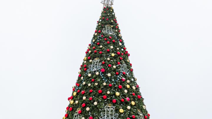 Ёлочки на 2 миллиона: к Новому году украсят территории площади Мочалова и ДК «Луч»