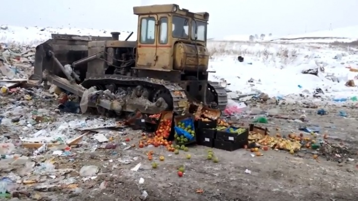 На полигоне раздавили 500 кг польских яблок