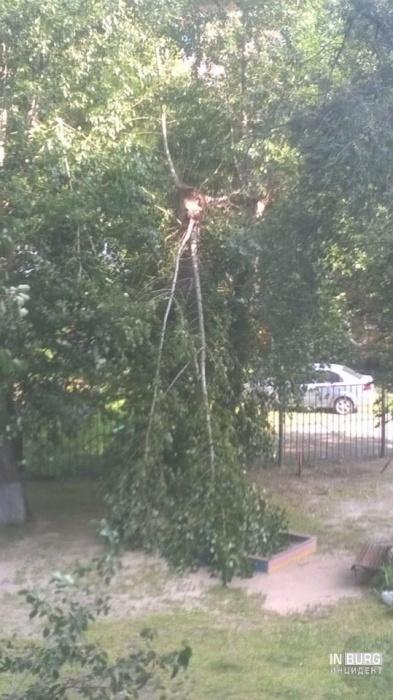 Сломанная ветка во дворе на Пальмиро Тольятти