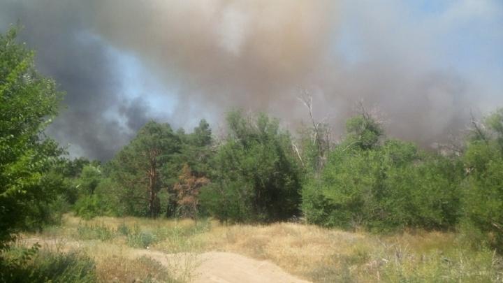 На юге Волгограда рядом с кладбищем вспыхнул пожар