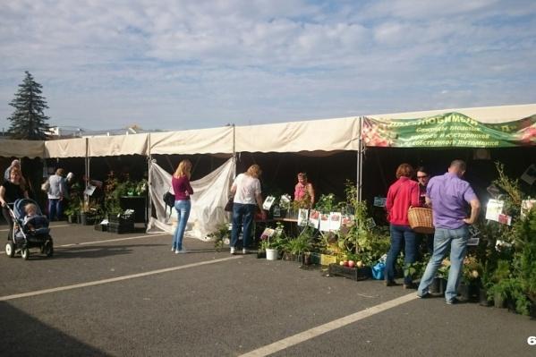 Парламентарии привели в пример сезонный рынок на площади Куйбышева