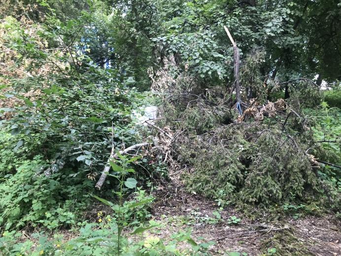 Местами можно встретить сваленные в кучу ветки сухих деревьев