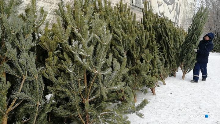 В Омске появились услуги по выносу ёлки из квартиры