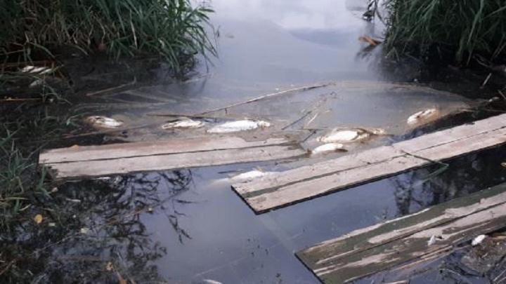«Убивают пруд, и прокуроры в курсе»: волгоградец бьёт тревогу о сливе в ливнёвку опасных отходов